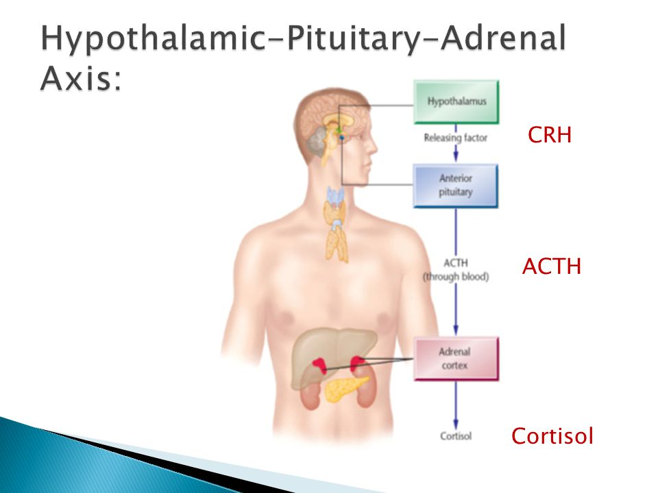 Hypothalamic-Pituitary-Adrenal Axis: