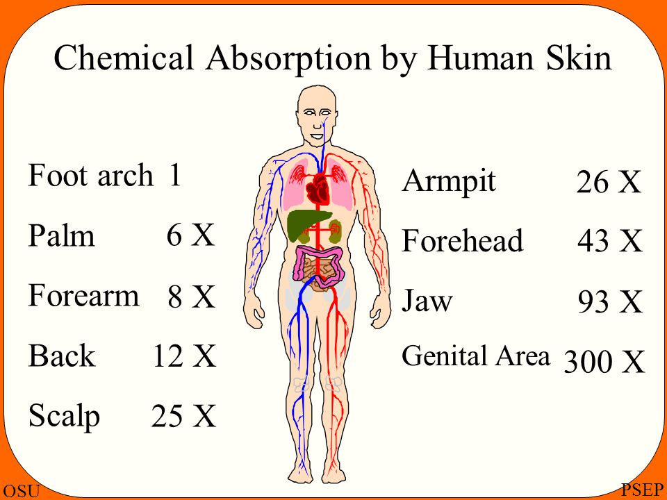 Chemical Absorption by Human Skin