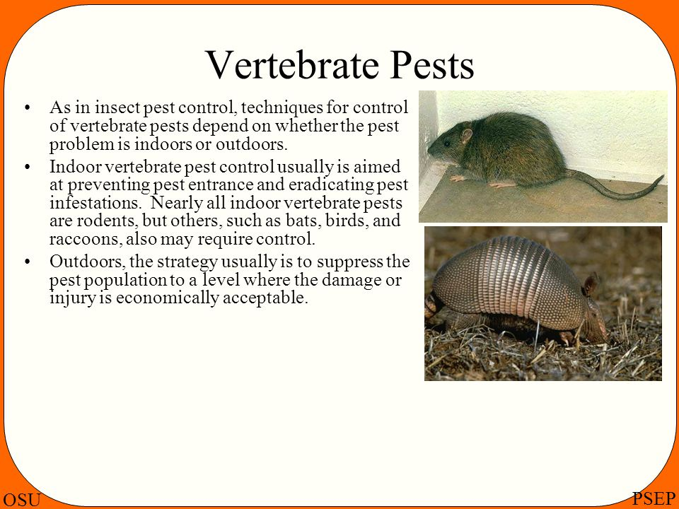 Vertebrate Pests As in insect pest control, techniques for control of vertebrate pests depend on whether the pest problem is indoors or outdoors.