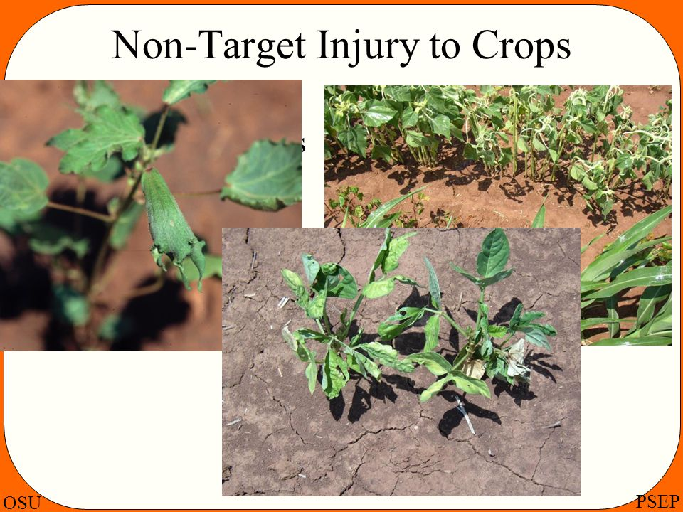 Non-Target Injury to Crops