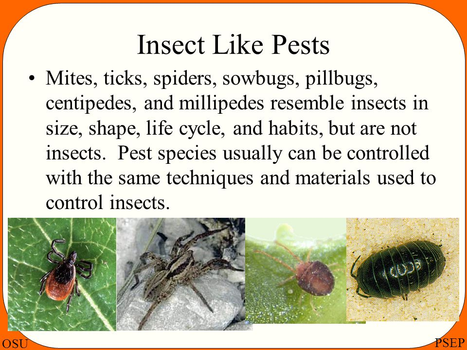 Insect Like Pests