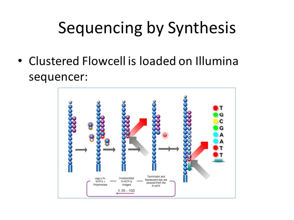 Sequencing by Synthesis