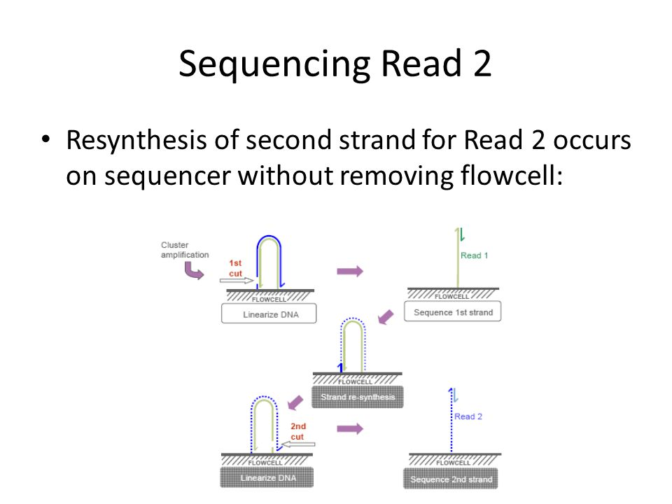 Sequencing Read 2 Resynthesis of second strand for Read 2 occurs on sequencer without removing flowcell: