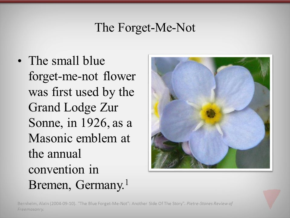 The Forget-Me-Not