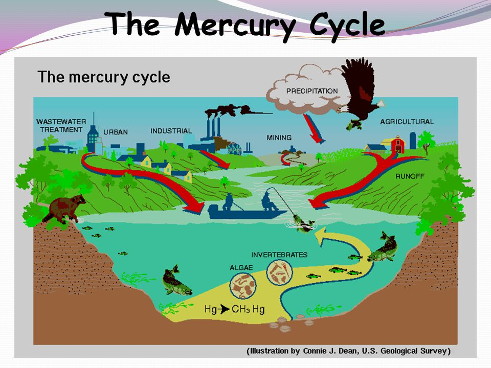 The Mercury Cycle A Small Dose of Toxicology - Lead and Mercury
