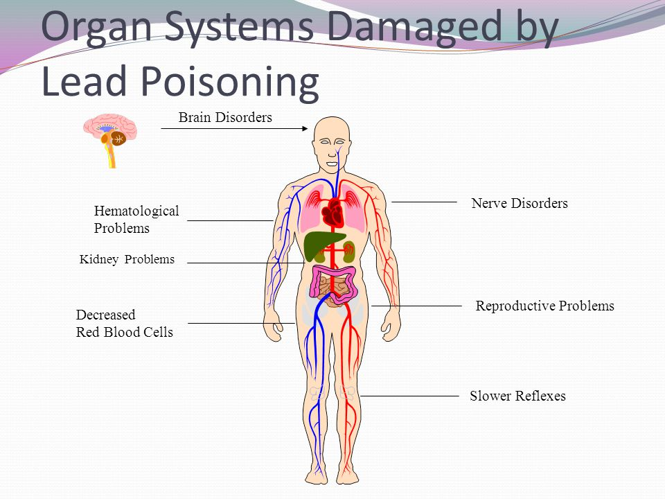Organ Systems Damaged by Lead Poisoning