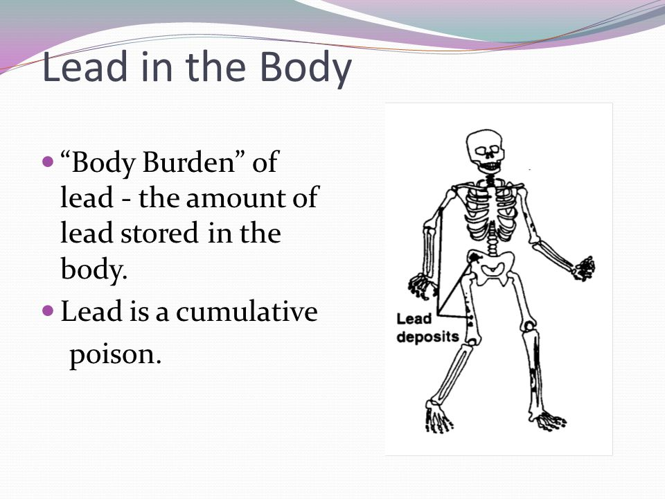 Lead in the Body Body Burden of lead - the amount of lead stored in the body. Lead is a cumulative.
