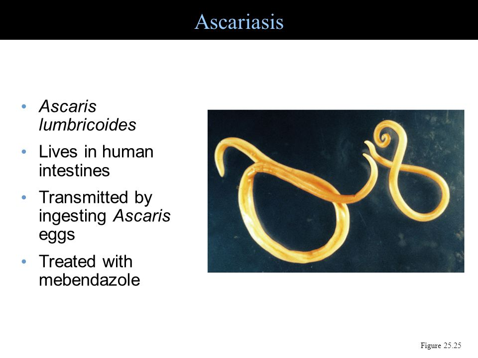 Ascariasis Ascaris lumbricoides Lives in human intestines