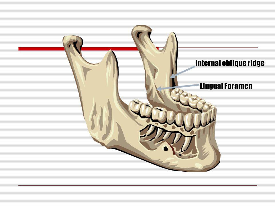 Internal oblique ridge