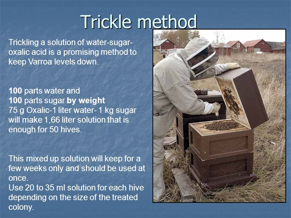 Trickle method Trickling a solution of water-sugar-oxalic acid is a promising method to keep Varroa levels down.