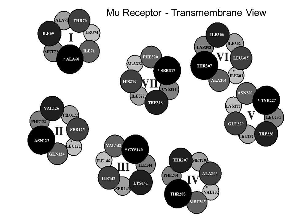 Mu Receptor - Transmembrane View