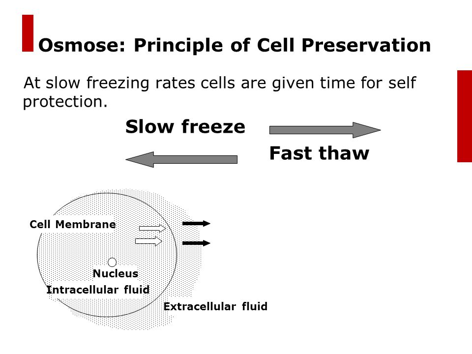 Osmose: Principle of Cell Preservation