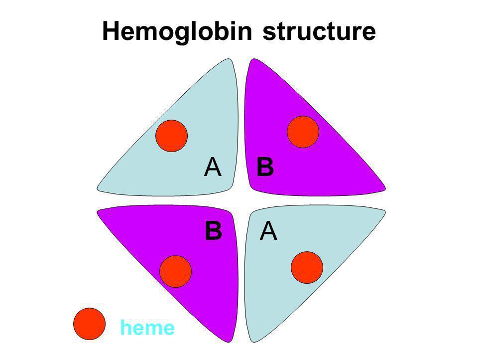Hemoglobin structure A B B A heme
