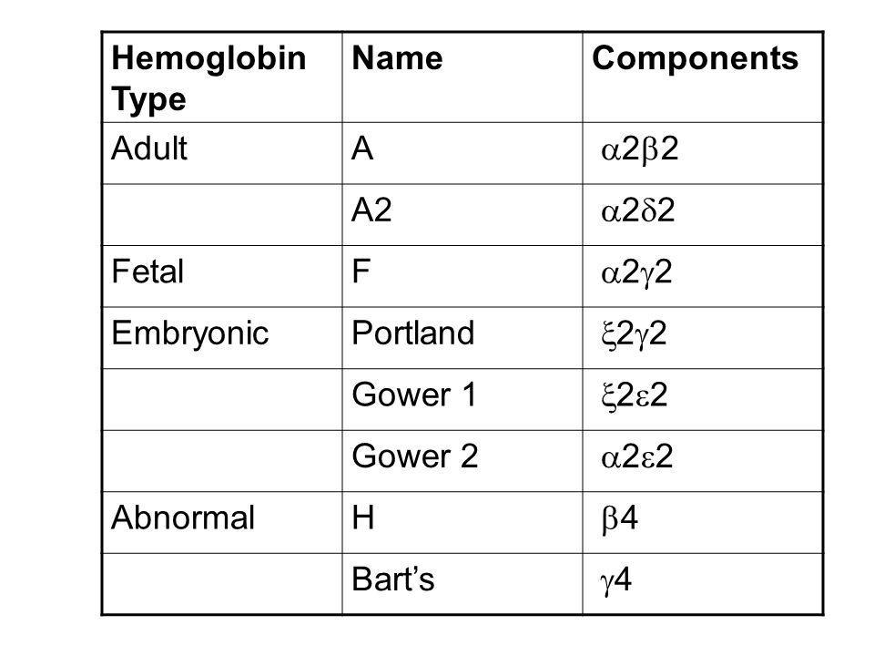 Hemoglobin Type Name. Components. Adult. A. 22. A2. 22. Fetal. F. 22. Embryonic. Portland.