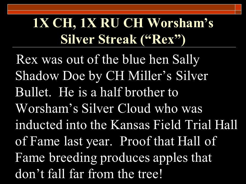 1X CH, 1X RU CH Worsham's Silver Streak ( Rex )