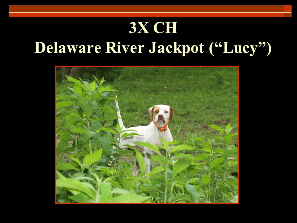 3X CH Delaware River Jackpot ( Lucy )