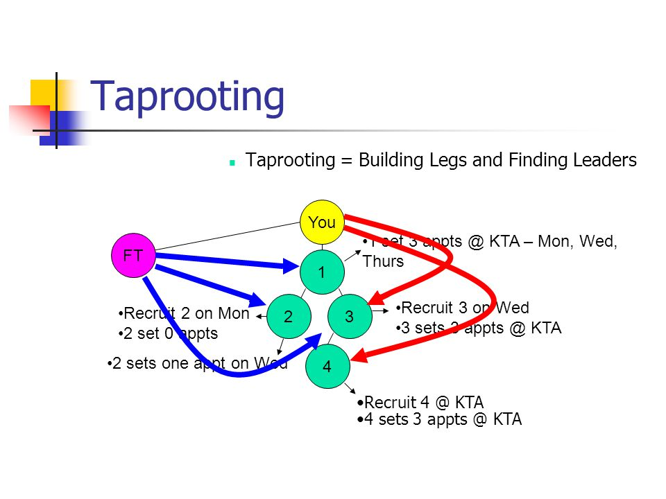 Taprooting Taprooting = Building Legs and Finding Leaders You