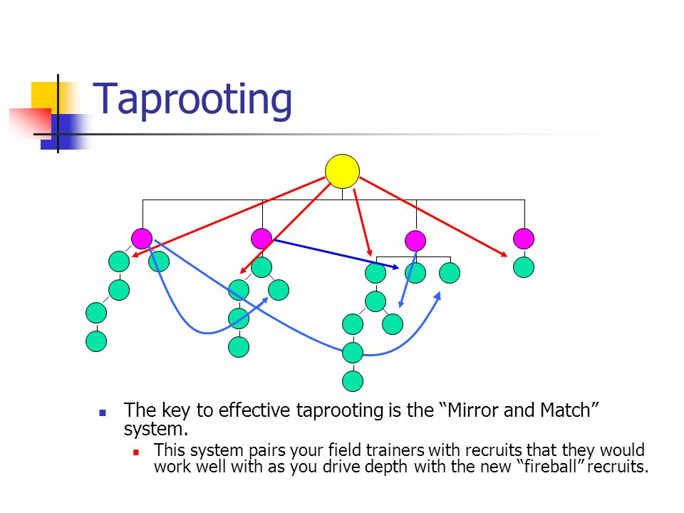 Taprooting The key to effective taprooting is the Mirror and Match system.