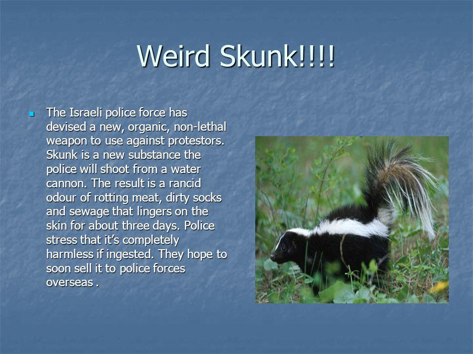 Weird Skunk!!!!