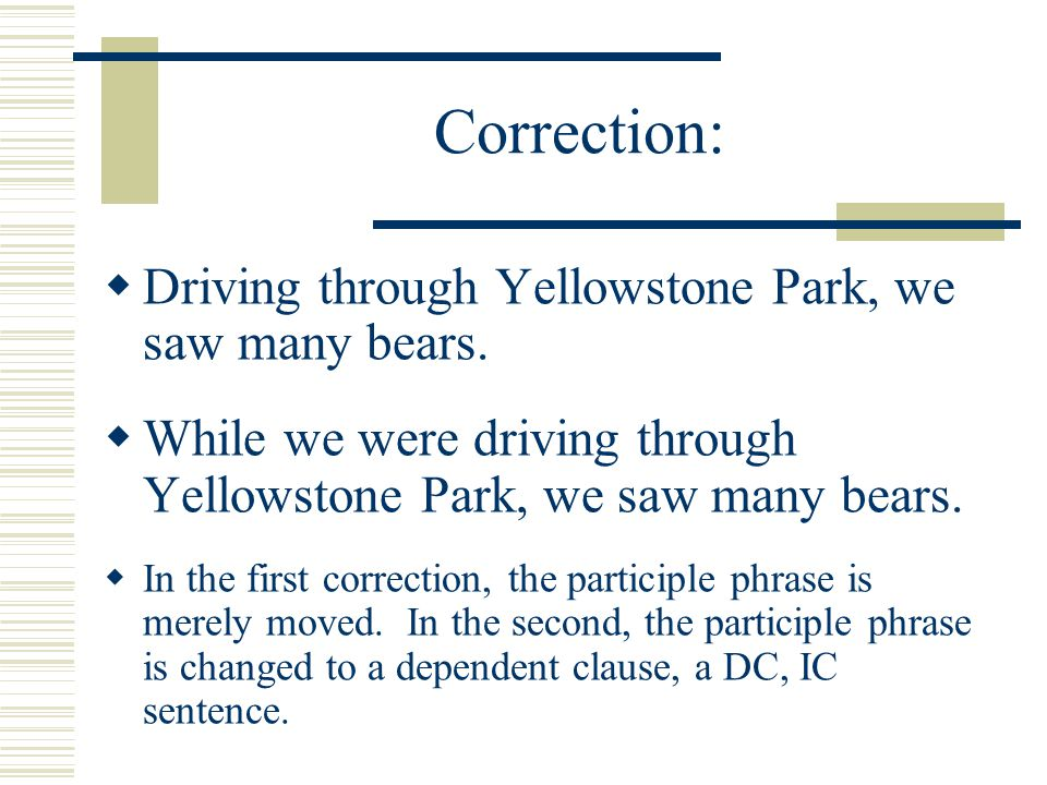 Correction: Driving through Yellowstone Park, we saw many bears.