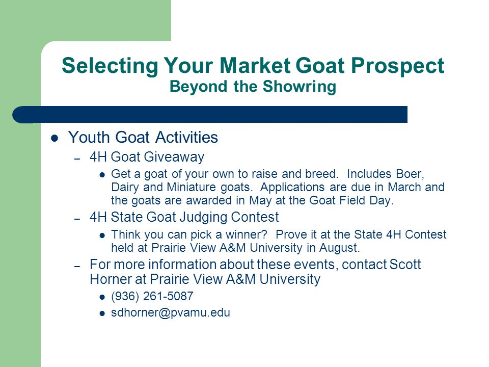 Selecting Your Market Goat Prospect Beyond the Showring