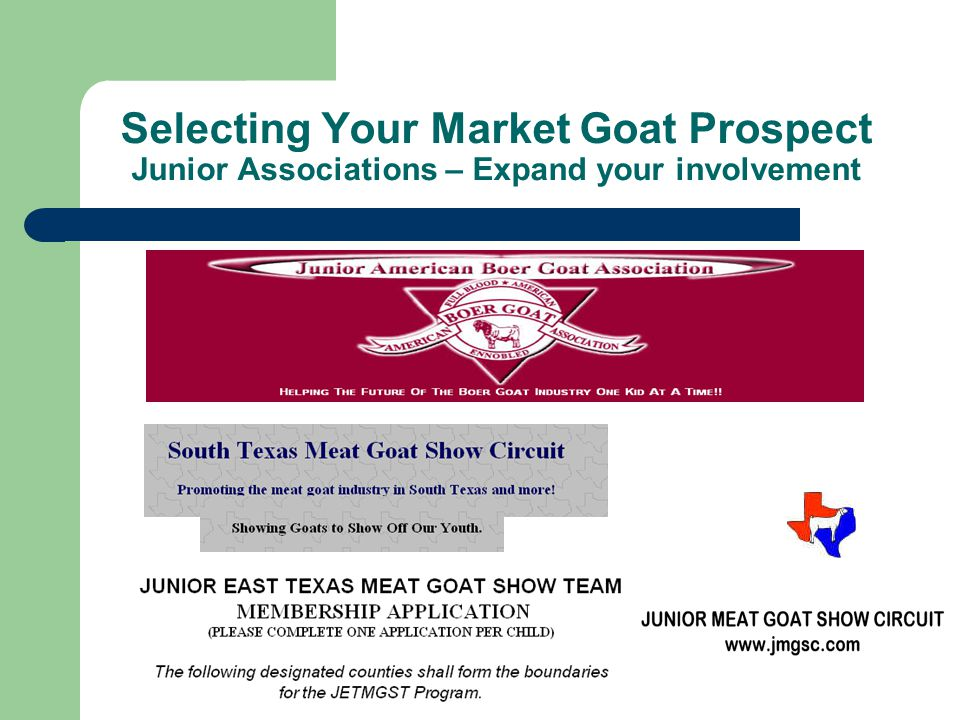 Selecting Your Market Goat Prospect Junior Associations – Expand your involvement