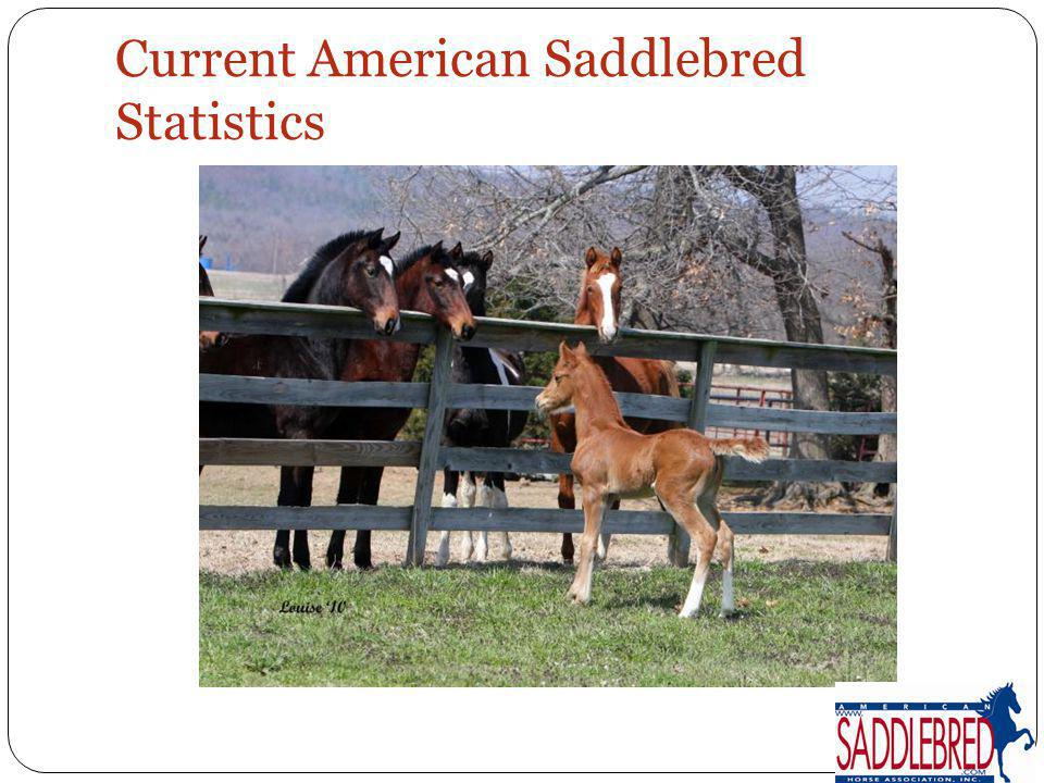 Current American Saddlebred Statistics