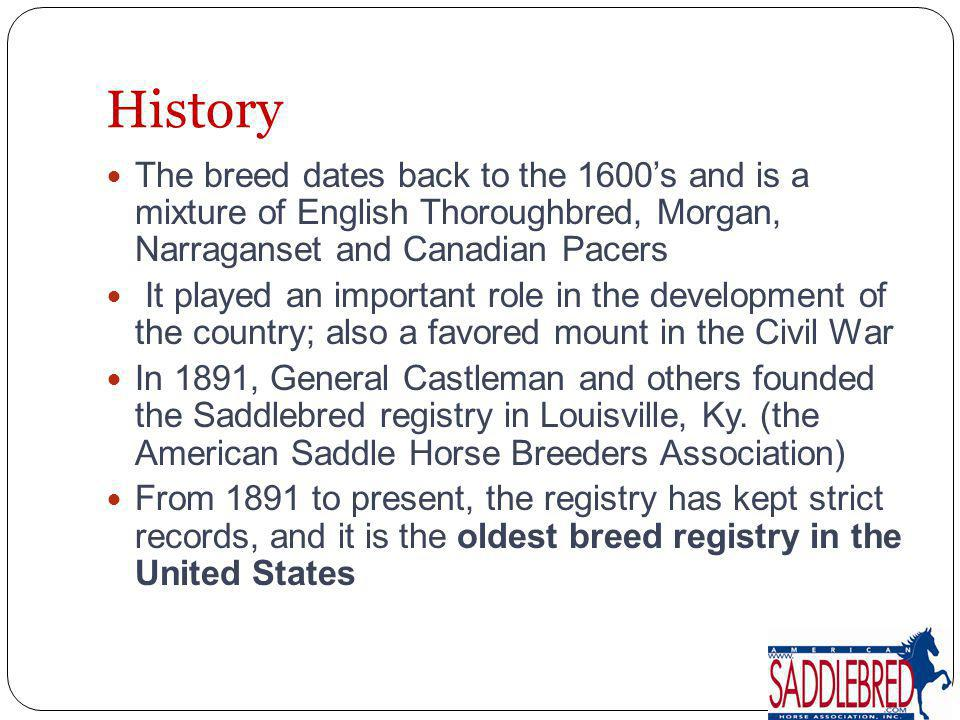 History The breed dates back to the 1600's and is a mixture of English Thoroughbred, Morgan, Narraganset and Canadian Pacers.