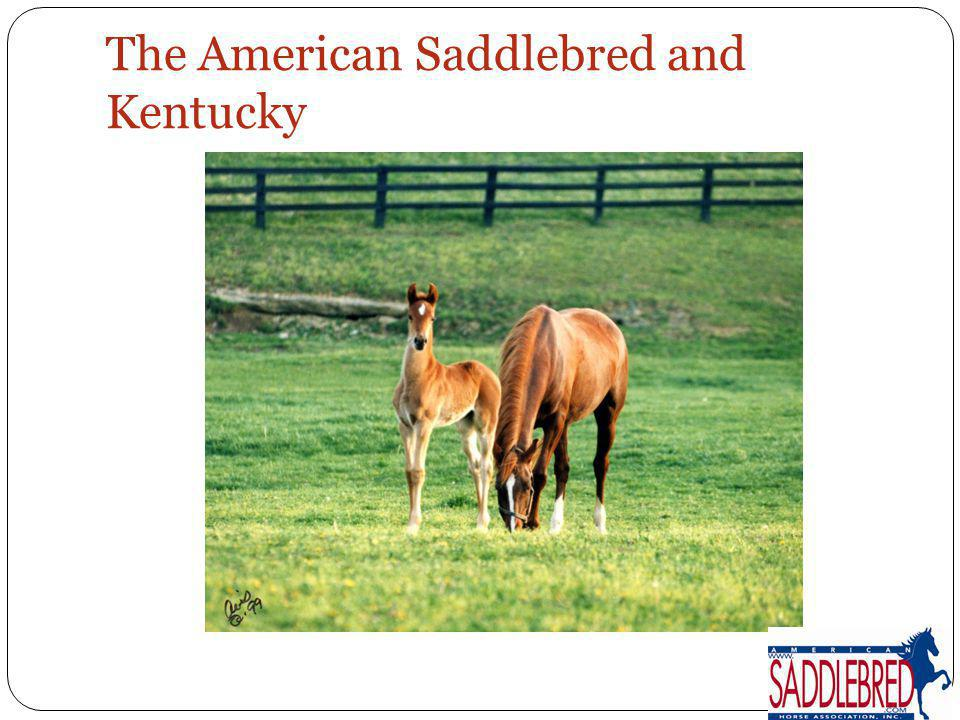 The American Saddlebred and Kentucky
