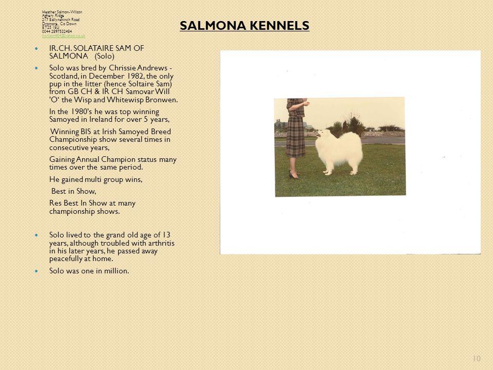 SALMONA KENNELS IR.CH. SOLATAIRE SAM OF SALMONA (Solo)