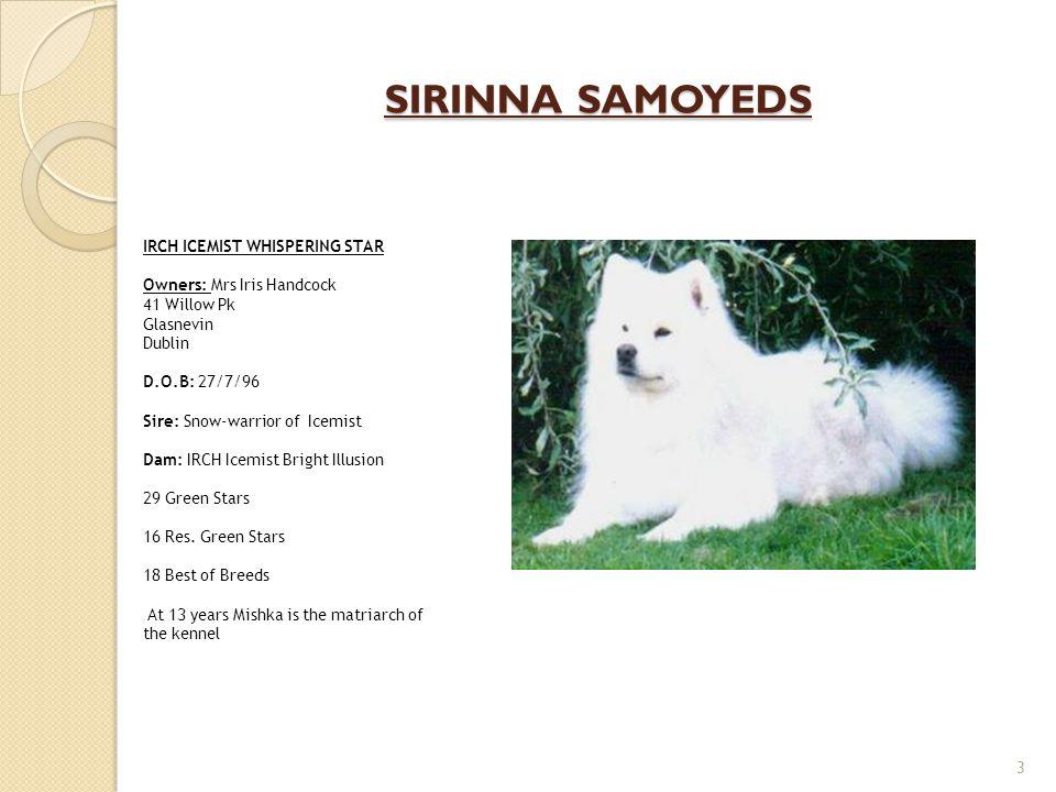 SIRINNA SAMOYEDS IRCH ICEMIST WHISPERING STAR