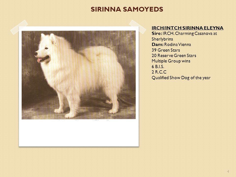 SIRINNA SAMOYEDS IRCH/INTCH SIRINNA ELEYNA