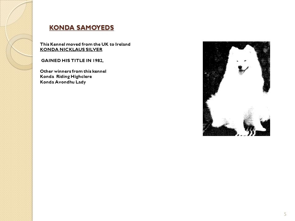 KONDA SAMOYEDS This Kennel moved from the UK to Ireland KONDA NICKLAUS SILVER. GAINED HIS TITLE IN 1982,