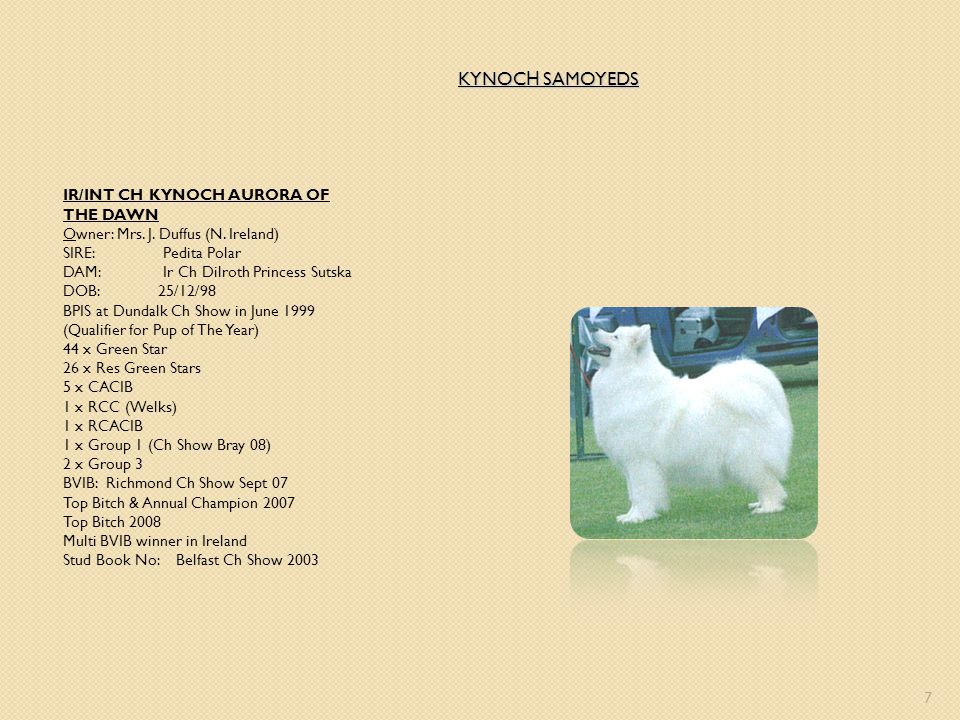 KYNOCH SAMOYEDS IR/INT CH KYNOCH AURORA OF THE DAWN