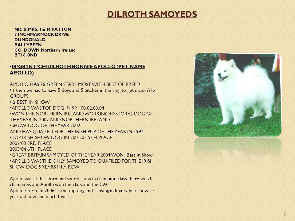 DILROTH SAMOYEDS MR. & MRS. J & M PATTON. 7 INCHMARNOCK DRIVE. DUNDONALD. BALLYBEEN. CO. DOWN Northern Ireland.
