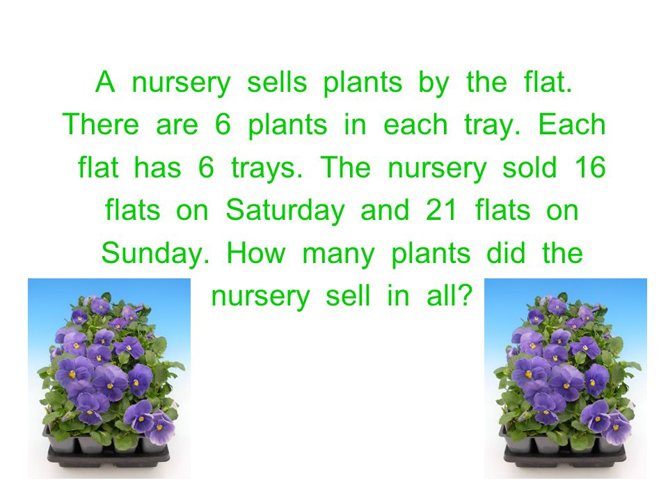 A nursery sells plants by the flat.