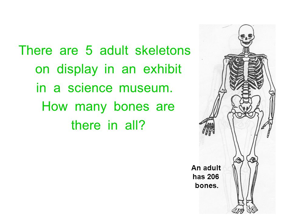 There are 5 adult skeletons on display in an exhibit