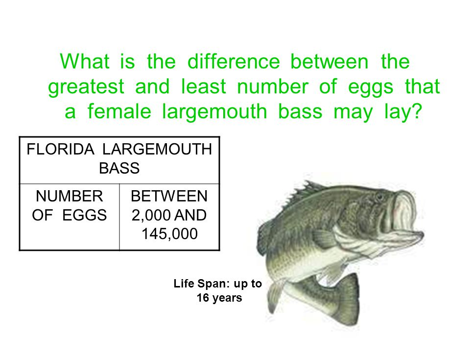 FLORIDA LARGEMOUTH BASS