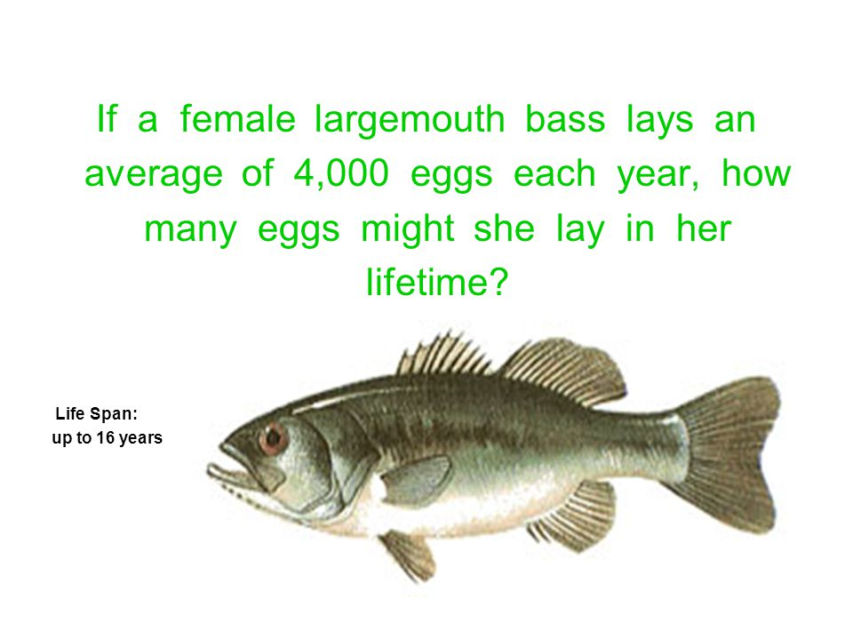 If a female largemouth bass lays an