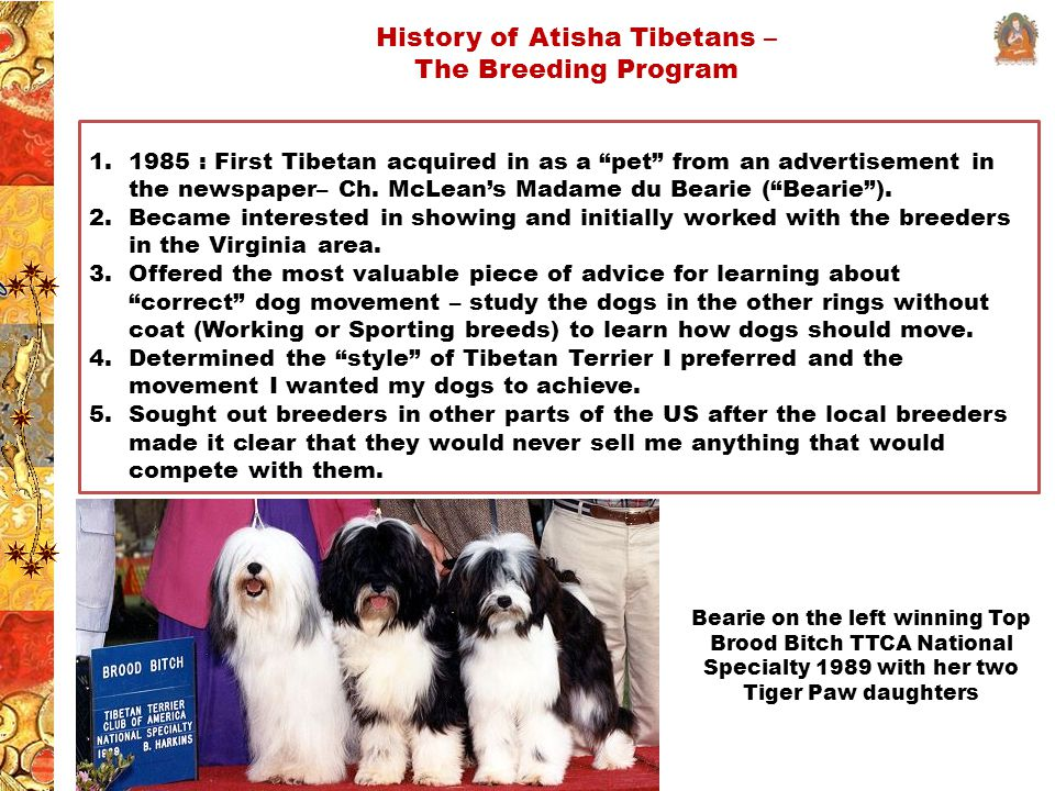History of Atisha Tibetans – The Breeding Program