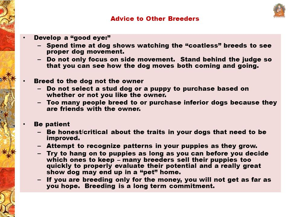 Advice to Other Breeders