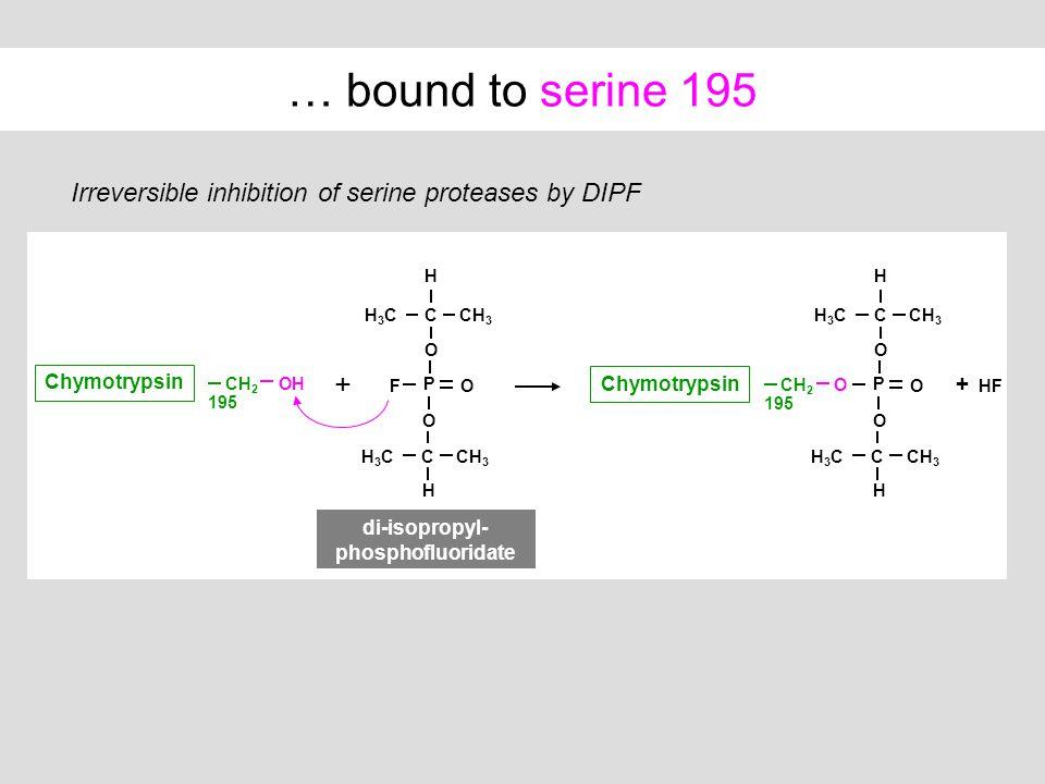 di-isopropyl-phosphofluoridate