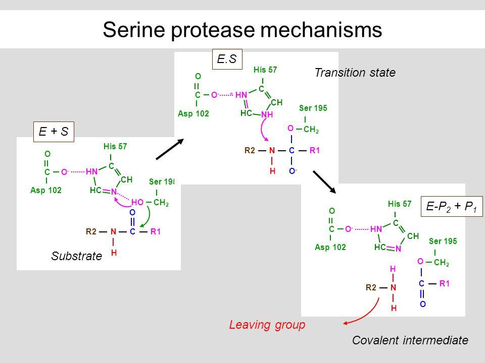 Serine protease mechanisms