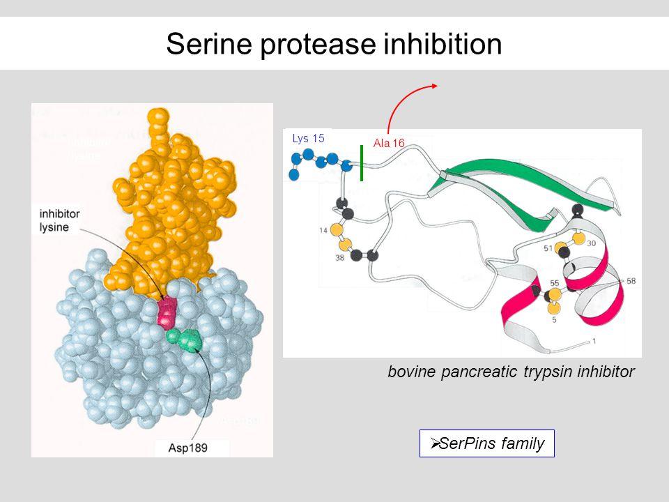 Serine protease inhibition