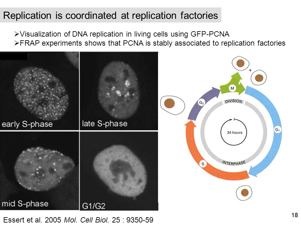 Replication is coordinated at replication factories
