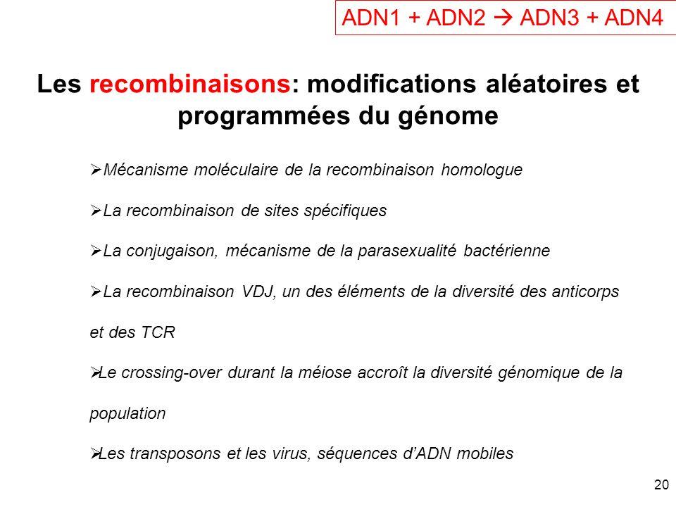 Les recombinaisons: modifications aléatoires et programmées du génome