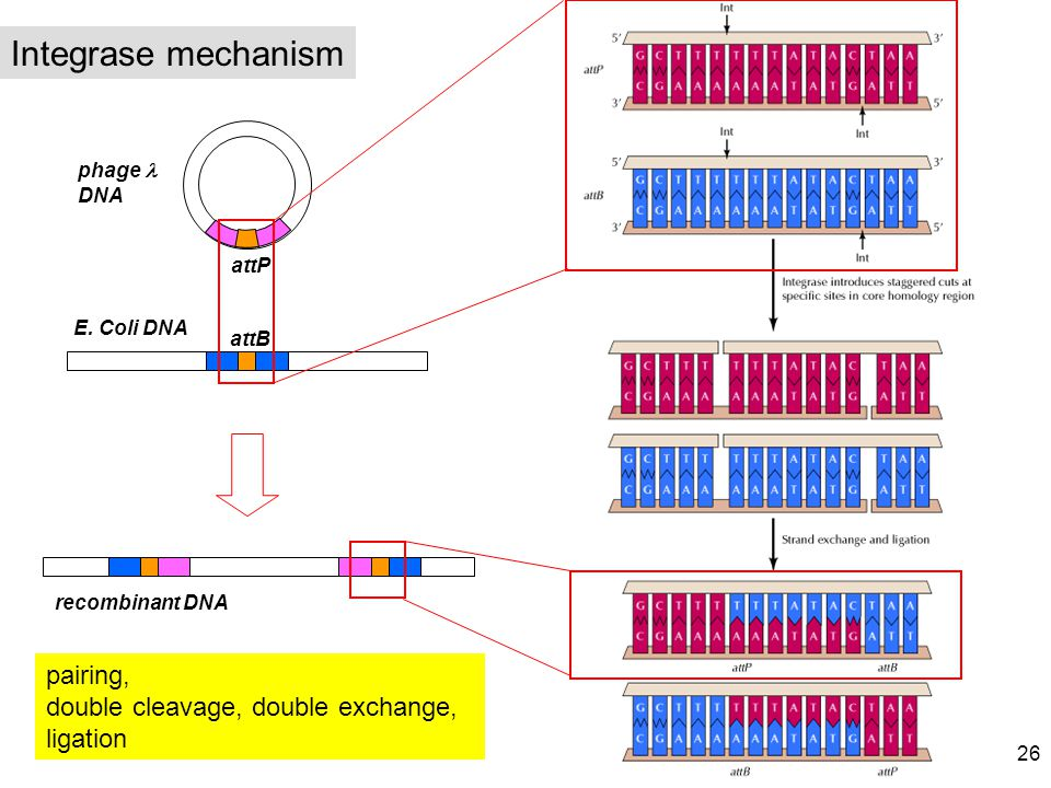 Integrase mechanism pairing,