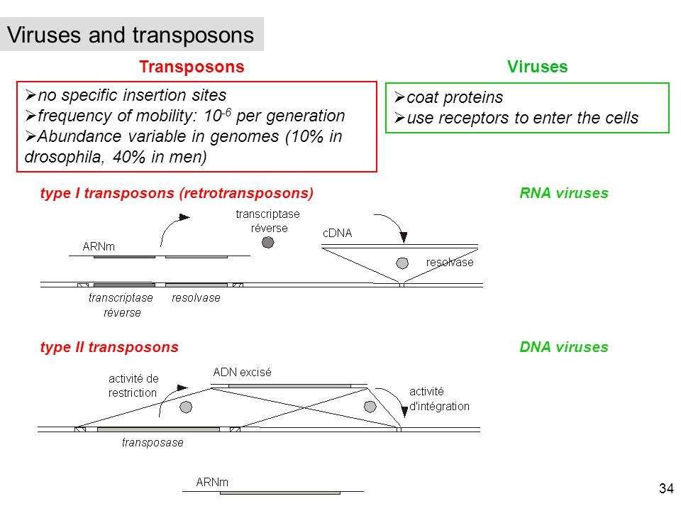 Viruses and transposons