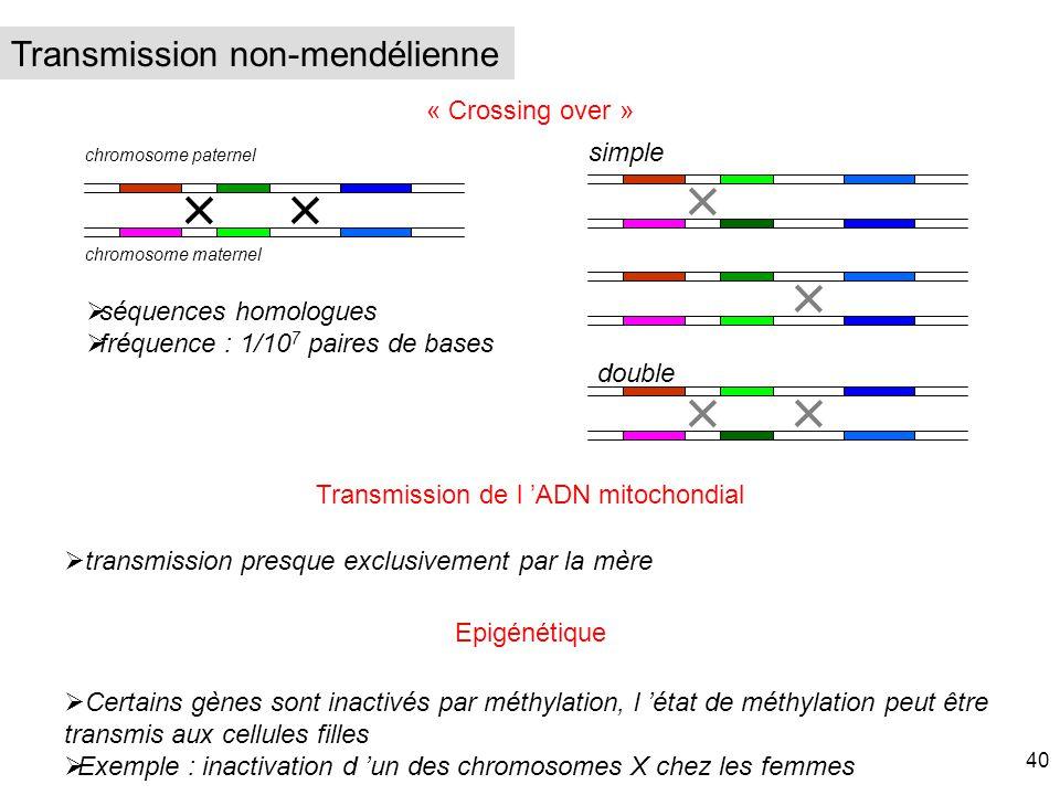 Transmission de l 'ADN mitochondial