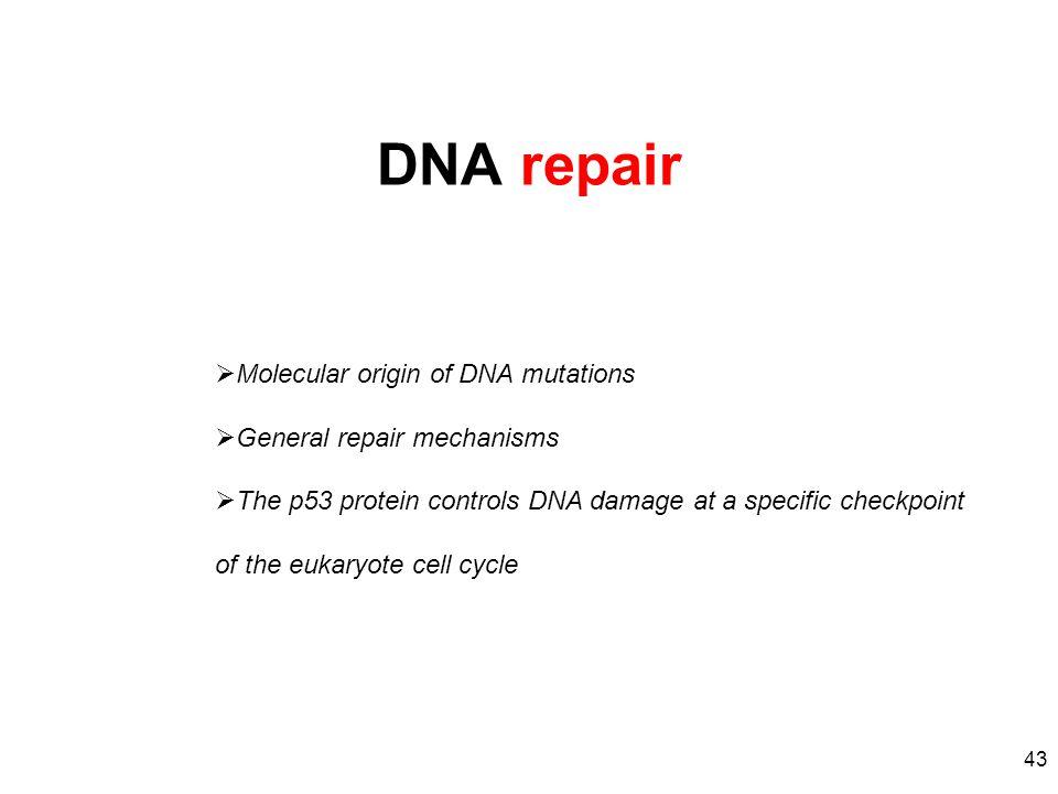 DNA repair Molecular origin of DNA mutations General repair mechanisms